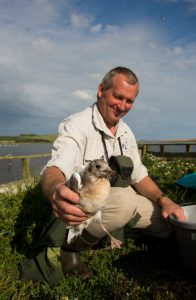 Deputy Swanherd Steve Groves pictured here with the very first fledged and ringed Black-headed gull chick. ©Charlie Wheeler