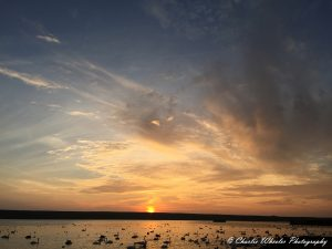 Sunset at Abbotsbury Swannery © Charlie Wheeler