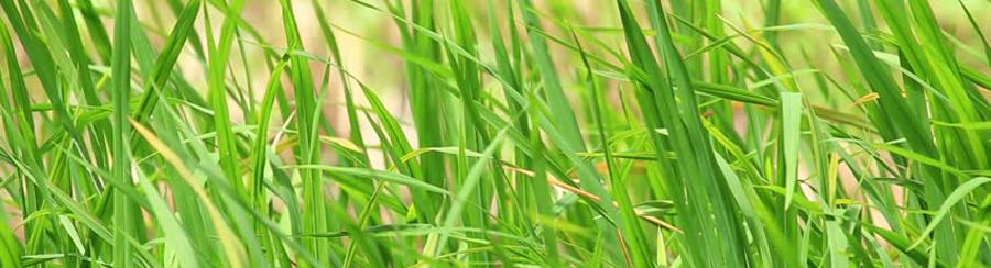 Reedbed Warblers