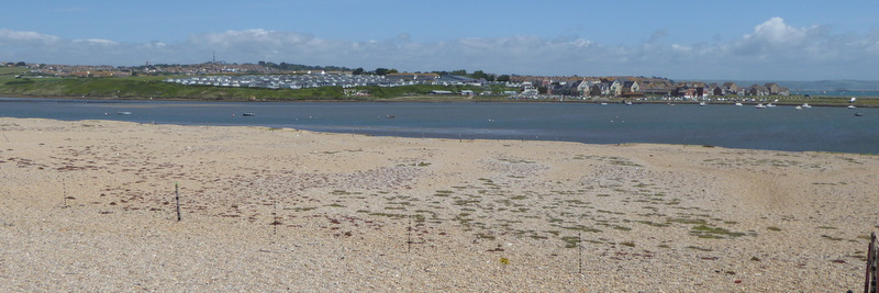 Visit to the Little Tern Colony